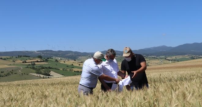 Buğday üretim sezonu yaklaşıyor