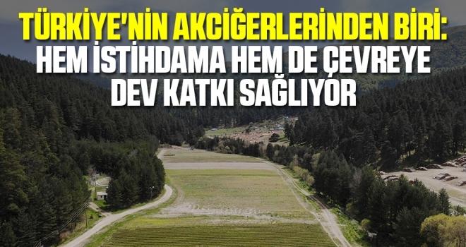 Türkiye'nin akciğerlerinden biri: Hem istihdama hem de çevreye dev katkı sağlıyor