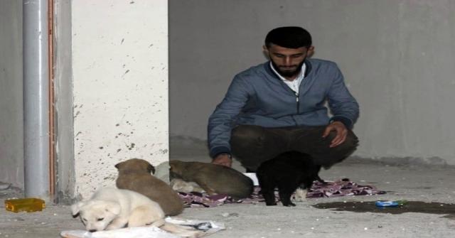 Siirtte 7 Yavru Köpeği Ölüme Terk Ettiler