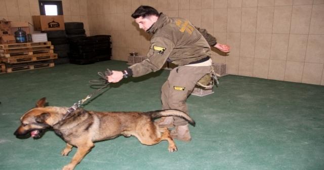 (Özel) İstanbul Havalimanında Apron Güvenliği Özel Köpeklere Emanet