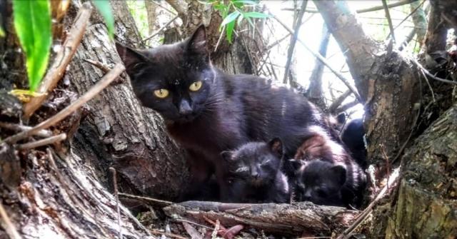 O Kedi Yavrularını Korumak İsterken Öldü