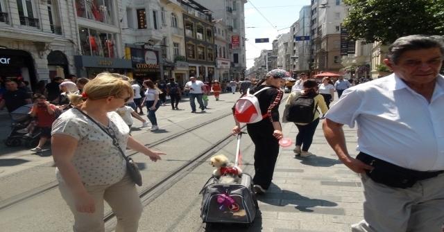 (Özel) Özel Arabasıyla Gezen Köpek İstiklal Caddesinde İlgi Odağı Oldu