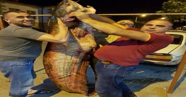 Kızılırmakta Dev Yayın Balığı Yakaladılar