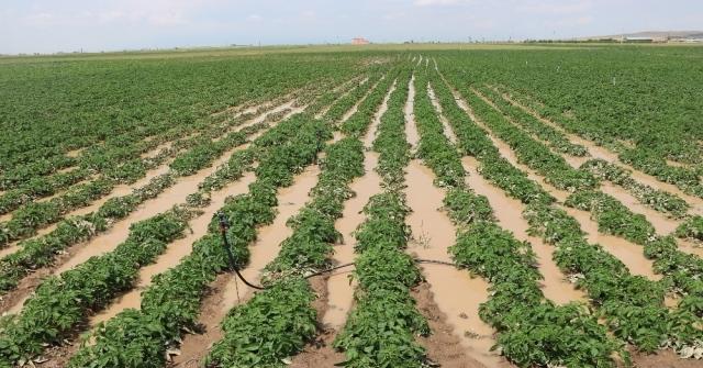 Niğdede Patates Tarlaları Su Altında Kaldı