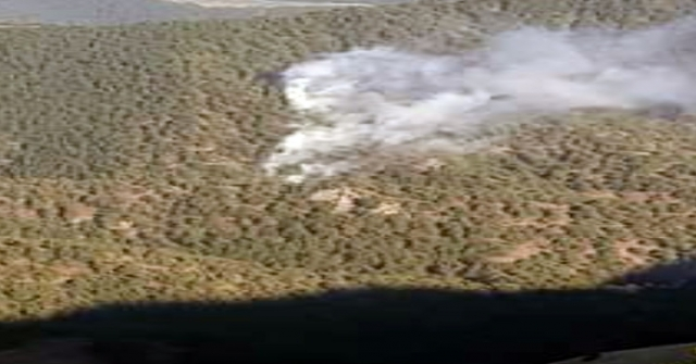 Tokatta Orman Yangını