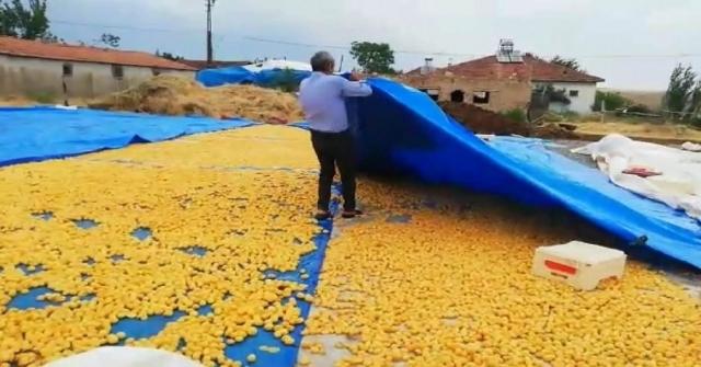 Malatyada Sağanak Yağış Kayısı Üreticilerini Vurdu