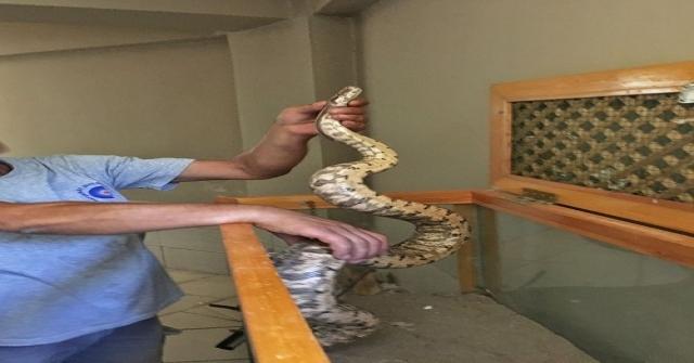 Antalya Otogarında Valiz İçinde Boa Yılanı Ele Geçirildi
