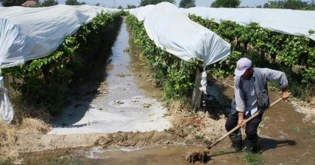 Üzümler Sıcaktan Etkilenmesin Diye Sulama Artırıldı