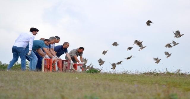 Kocaelide Zararlı Böceklerle Mücadele İçin Bin Keklik Doğaya Salındı