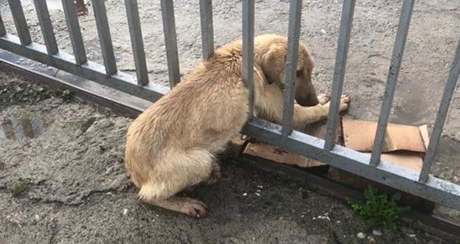 Demir parmaklıklara sıkışan köpeği trafik ekipleri kurtardı