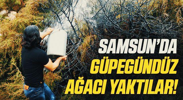 Samsun'da Güpegündüz ağacı yakıp kaçtı