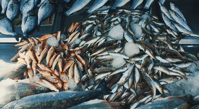 Yasak sonrası balıkfiyatları yükseldi