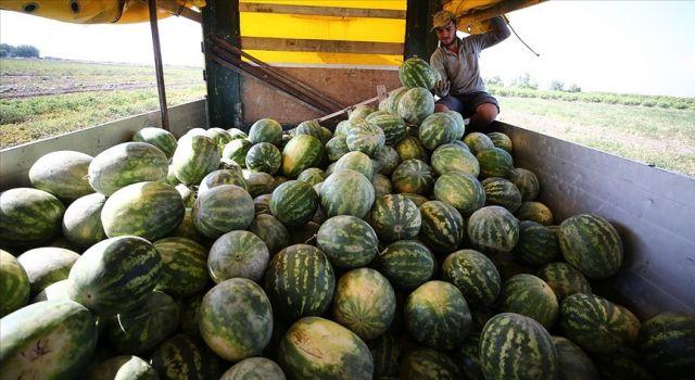 Tescilli Adana karpuzu 8 ülkeye ihraç ediliyor