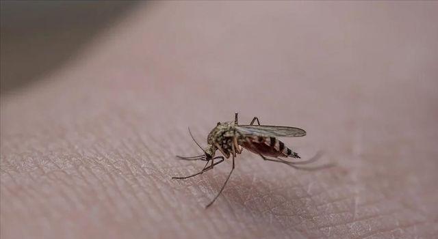 Vatandaşları rahatsız eden sivrisinekler İstanbul'un farklı ilçelerinde de görülmeye başladı