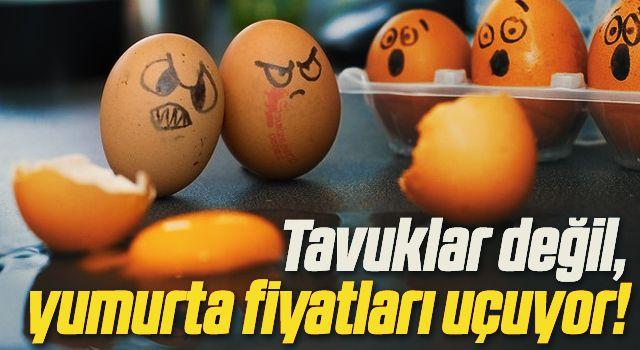 Tavuklar değil, yumurta fiyatları uçuyor!