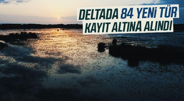 Kızılırmak Deltası'nda 84 yeni tür kayıt altına alındı