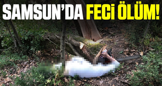 Samsun'da kestiği ağacın altında kalan şahıs öldü