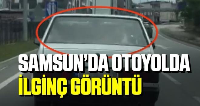 Samsun'da Otoyolda ilginç görüntü: Arabanın arka koltuğunda inek taşıdı