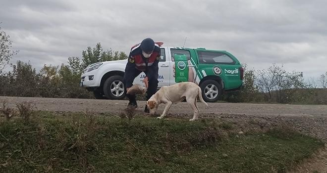 Samsun'da jandarma, sokak hayvanları için belirli noktalara yem bıraktı