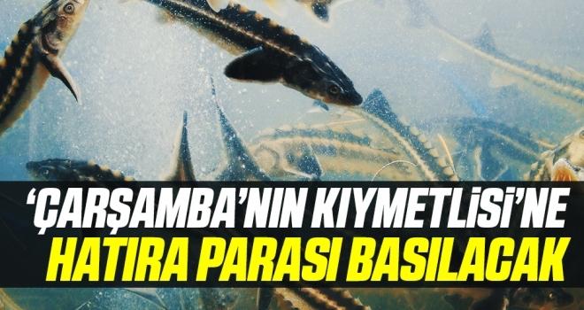 'Çarşamba'nın Kıymetlisi' Mersin Balığı'na Hatıra Para Basılacak