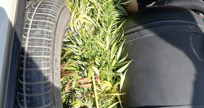 Samsun'da Aracın bagajında kubar esrar ele geçirildi