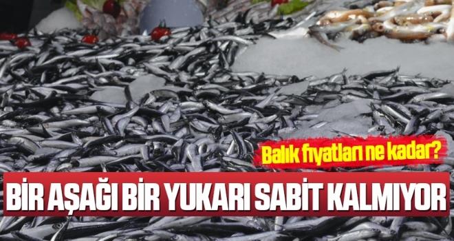 Balık Fiyatları Ne Kadar?