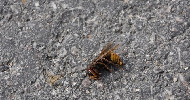 Arı korkusukaza yaptırdı