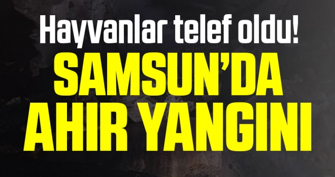 Samsun'da Ahır Yangını! Hayvanlar Telef Oldu