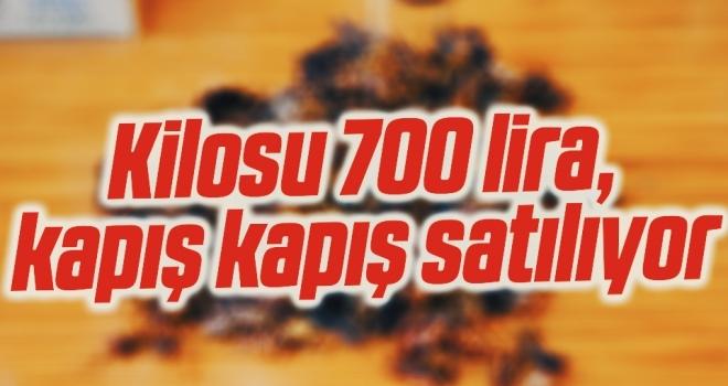 Kilosu 700 lira, kapış kapış satılıyor