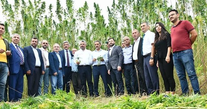 Protokol üyeleri kenevir hasadında