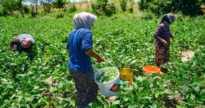 Boş arazisinde tarıma başlayan girişimci anne Iğdırlı kadınların iş umudu oldu