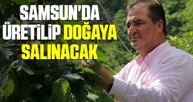 Samsun'da üretilip doğaya salınacak