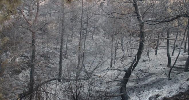 İzmir'deki yangında havadan söndürme çalışmaları yeniden başladı