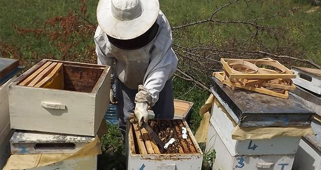 Arıcılara bahar bakımı uyarısı