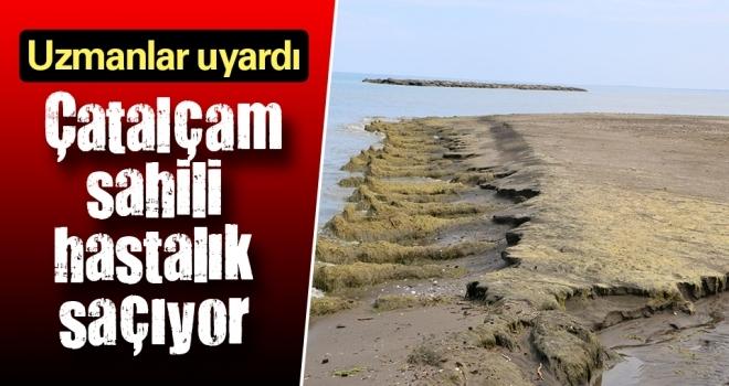 Deniz Meraklıları Dikkat! Çatalçam Sahili Hastalık Saçıyor