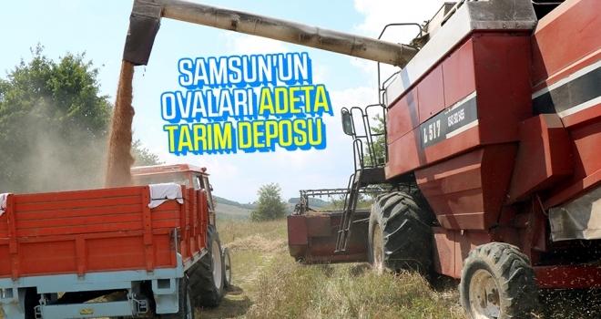 Samsun'un ovalarıadeta tarım deposu