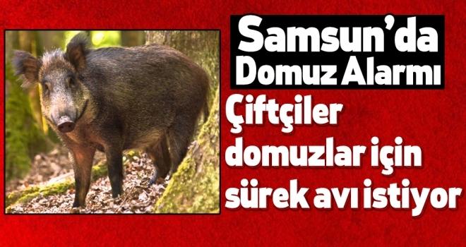 Samsun'da Çiftçiler domuzlar için sürek avı istiyor