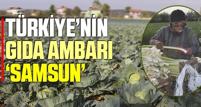 Türkiye'nin Gıda Ambarı 'Samsun'