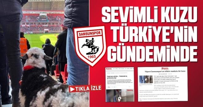 Samsunspor Haberleri   Sevimli Kuzu Türkiye'nin Gündeminde