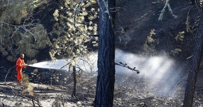 Tarım ve Orman Bakanı Pakdemirli: Ankara'daki orman yangını büyük ölçüde kontrol altına alındı