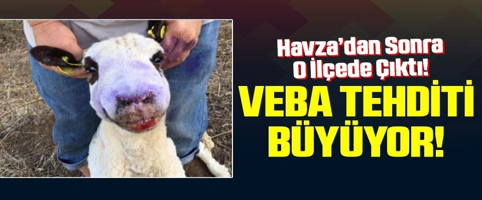 Samsun'da Veba Tehditi Büyüyor!