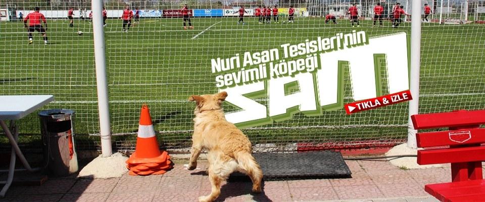 Nuri Asan Tesisleri'nin sevimli köpeği 'Sam'