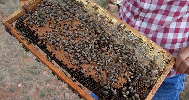 Bakanlık Önlem Aldı,Arı Ölümleri Azaldı