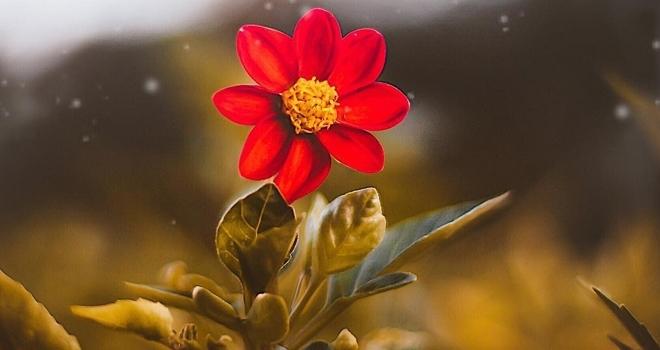 İstanbul Çiçekçileri Arasından En İyisi Her Zaman Neşe Çiçek